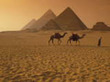 Giza Pyramids with Man Leading Two Camels Across the Desert in Egypt