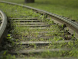 Grass Grows Between the Railroad Tracks at the Henry Doorly Zoo  Nebraska