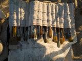 Brushes in a Canvas Paint Brush Holder Illuminated by Sunlight  Block Island  Rhode Island