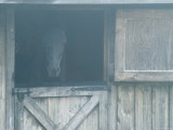 Brown Horse in a Barn in the Fog  Block Island  Rhode Island