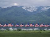 American Flags Honoring Veterans of Foreign Wars Fly on Memorial Day  Utah