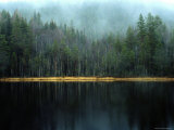 Arrow-Straight Evergreens Are Reflected in a River or Lake; the Rest is Lost in Mist