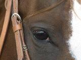 Horse at the Burwell Rodeo in Nebraska