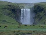 Iceland: Skogafoss  South Iceland