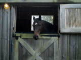 Brown Horse in a Barn  Block Island  Rhode Island