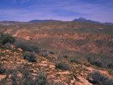 Desert Landscape of Arizona