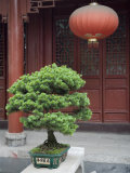 Bonsai Tree and Red Lantern and Buddhist Temple in Jingzhou  China