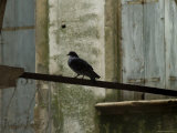 Bird Perched on a Wire  Asolo  Italy