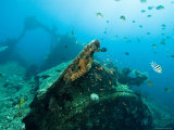 Diving on Wreck of Liberty  An American Cargo Ship Sunk in 1942  Bali  Indonesia