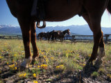 Horses Graze as a Wrangler Works on Spring Creek Ranch in Jackson  Wyoming