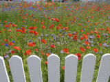 Denmark  Skagen  Garden of Red Poppies
