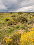 High Desert in Bloom Along Hwy 285 North of Tres Piedras  New Mexico