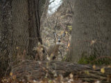 Curious Wild Doe in the Rock Creek Woods