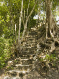 Excavated Stairs with Tree Growing above at the Caracol Maya Site  Belize