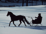 Horse-Drawn Sleigh Ride at Twilight in a Snowy Landscape