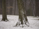 Falling Snow Turns the Dark Woods to White