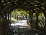 Curved Walkway in Central Park