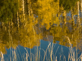 Fall Colors Reflected in a Trout Pond at Sunset  Colorado