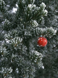 Holiday Ornament Hanging on Snow Dusted Pinion Tree  Colorado