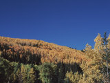 Hillside in Autumn-Hued Foliage in New Mexico