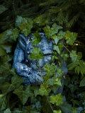 Gargoyle Shrouded in English Ivy  Mystic  Connecticut