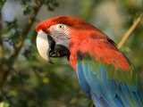 Green-Winged Macaw from the Sedgwick County Zoo  Kansas