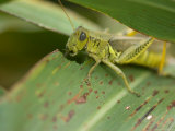 Differential Grasshopper on a Leaf