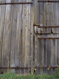 Dilapidated Antique Timber Doors and Bolts  on a Wooden Barn  Australia