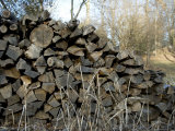 Dried Wood Stockpiled for Winter  Silver Spring  Maryland