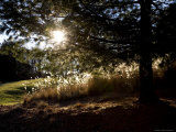 Evening Sun Backlights Serene Local Parkland  Silver Spring  Maryland