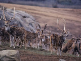 Herd of Deer Stand Warily  China