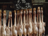 Duck Carcasses Hang in a Chinese Food Market  Guangzhou  China