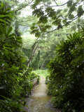 Flooded Path at Manoa Falls  Honolulu  Hawaii