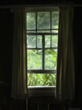 Looking Out Through a Weathered Window to Lush Green Foliage