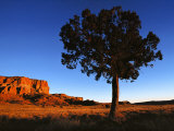 Pine Tree in Barren Land  New Mexico
