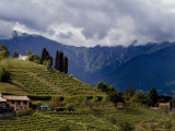 Farmhouse on a Vineyard-Covered Hillside with Mountains in Background  Asolo  Italy