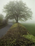 Hedge-Lined Country Road in Somerset  England