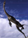 Royal Tyrrell Museum Paleontology  Struthiomimus Model Dinosaur