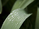 Rain Droplets on Leaves in a Flower Garden  New York