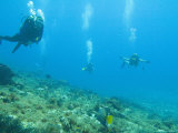 Diving Cedral Wall  Experienced Diver on Left  Inexperienced on Right  Cozumel  Mexico