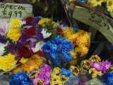 Flowers for Sale at an Outdoor Market Stand  New York