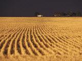 Landscape of Farm Field after Storm  Kansas