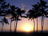 Palm Trees in Silhouette During Sunset on Oahu  Hawaii