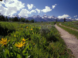 Road Leading Towards the Tetons in Grand Teton National Park  Wyoming