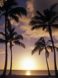 Palm Trees in Silhouette at Sunset on Oahu  Hawaii