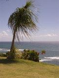 Garden Landscape on Oahu Island  Hawaii
