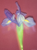 Long Exposure of Flowers