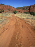 Red Dirt Road Through the Pinyons  Sagebrush and Red Rock  New Mexico
