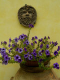 Potted Purple Petunias on a Wooden Bench against a Yellow Wall  Tuscany  Italy