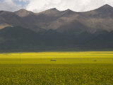 Mountains and Rapeseed Fields  Qinghai  China